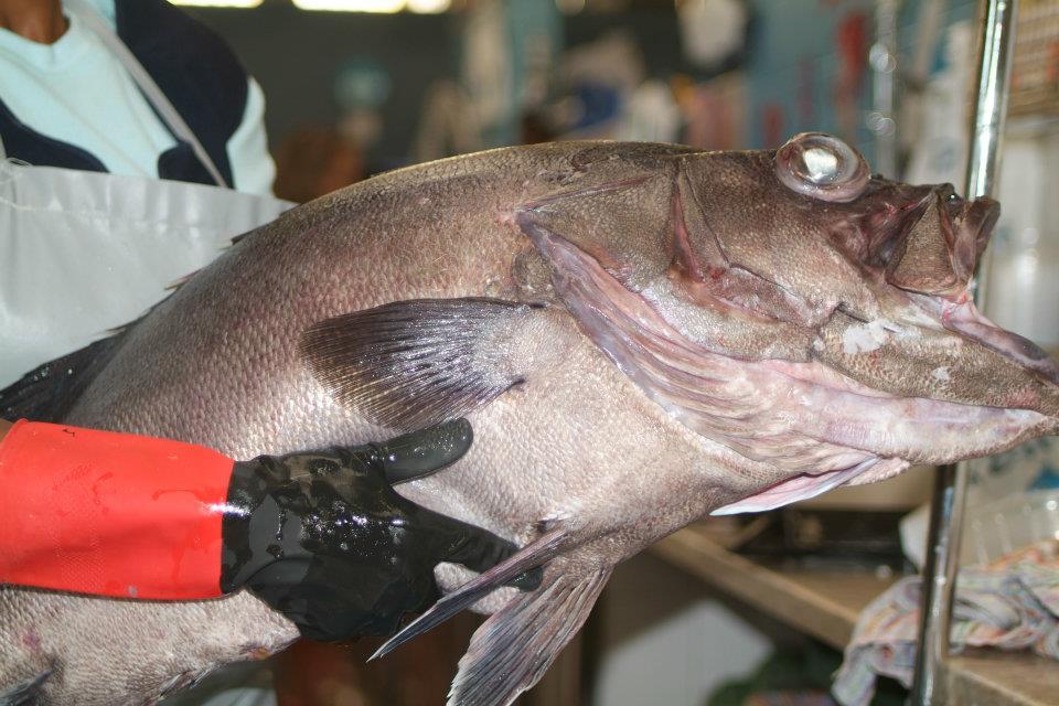 o nosso peixe sempre fresco